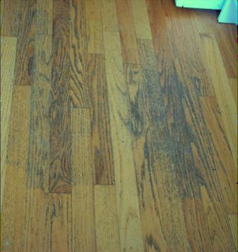 Shame On Consumer Reports Rosebud Floors